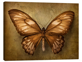 Canvas print  Brown butterfly - Elena Schweitzer