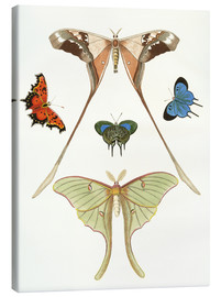 Canvas print  Different kinds of butterflies - German School