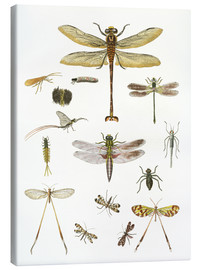 Canvas print  Strange insects - German School