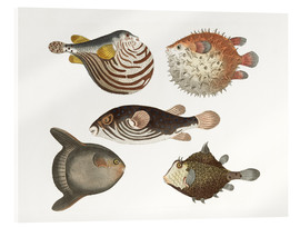 Acrylic print  Wonderful fish - German School
