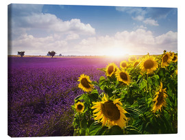 Canvas print  Lavender and sunflowers fields , Provence - Elena Schweitzer