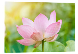 Acrylic print  Lotus flower and Lotus flower plants