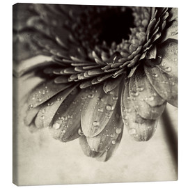 Canvas print  Close up abstract of gerbera flower