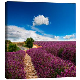 Canvas print  Beautiful lavender field