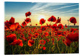 Acrylic print  Poppies in the Evening - Steffen Gierok