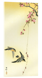 Acrylic print  Starlings and Cherry Tree - Ohara Koson