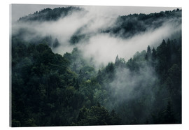 Acrylic print  Mystic forests in fog - Oliver Henze