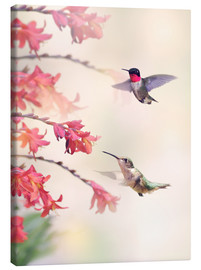 Canvas print  Hummingbirds and flowers