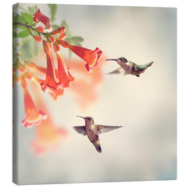Canvas print  Hovering hummingbirds