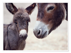 Premium poster  Donkey Foal