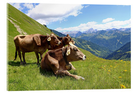 Acrylic print  Cows relax on the mountain