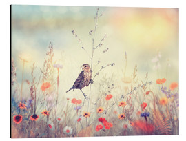 Aluminium print  Field with wild flowers