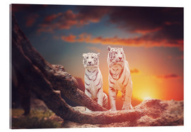 Acrylic print  Two white tigers