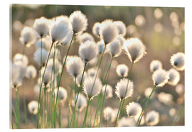Acrylic print  Grass in the breeze - Julia Delgado