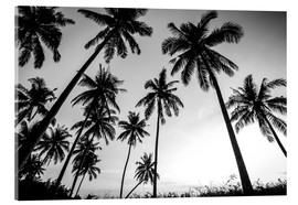 Acrylic print  Silhouettes of palm trees