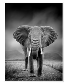 Premium poster  Elephant on black background