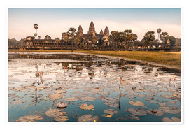 Premium poster  Angkor Wat at sunset