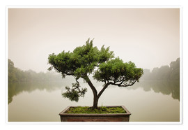 Premium poster  Japanese bonsai in zen garden