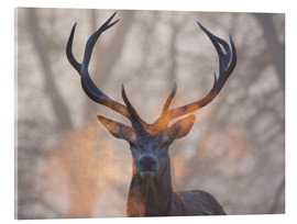 Acrylic print  Stag breath at sunrise, Richmond park - Alex Saberi