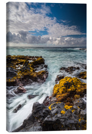 Canvas print  Yellow Seaweed at the Coast of Big Island, Hawaii - Markus Ulrich