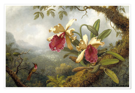 Premium poster  Orchids and hummingbird - Martin Johnson Heade