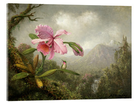 Acrylic print  Orchid and Hummingbird - Martin Johnson Heade