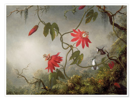 Premium poster  Hummingbird on a Passionflower - Martin Johnson Heade