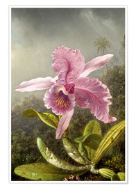 Premium poster  Hummingbird and orchid (detail) - Martin Johnson Heade