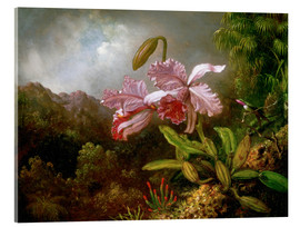 Acrylic print  Orchids in a Jungle - Martin Johnson Heade