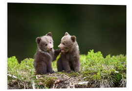 Foam board print  Two young brown bears