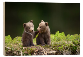 Wood print  Two young brown bears