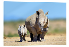 Acrylic print  White rhinoceros with young in Kenya, Africa