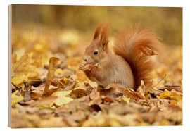 Wood print  Red Squirrel in an urban park in autumn