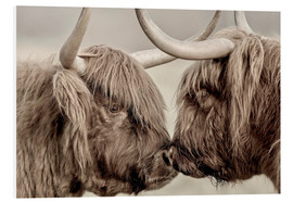 Foam board print  Two Scottish Highland Cattle