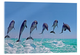 Acrylic print  6 dolphins jump out of the water - Gérard Lacz