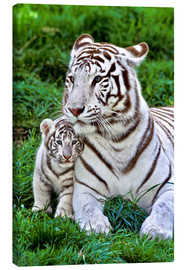Canvas print  White tiger mother with child - Gérard Lacz