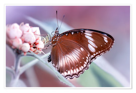 Premium poster butterfly fragrance