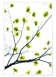 Premium poster Signs of Spring