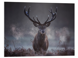 Foam board print  A majestic red deer stag breathing - Alex Saberi
