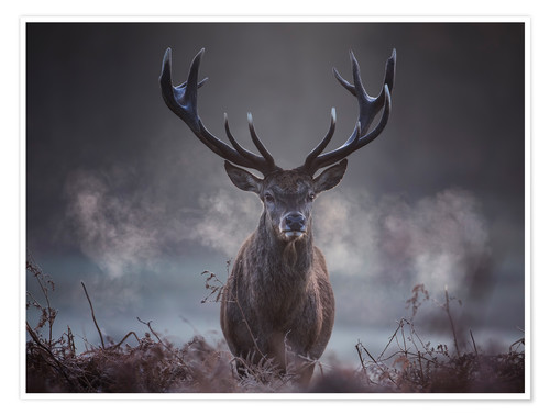 Premium poster A majestic red deer stag breathing