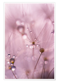 Premium poster Dewdrops on a dandelion seed
