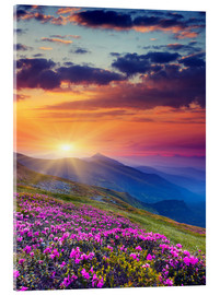 Acrylic print  Rhododendron Blossom in the Carpathians