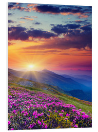 Foam board print  Rhododendron Blossom in the Carpathians