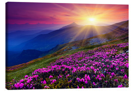 Canvas print  Rhododendron in the Carpathians
