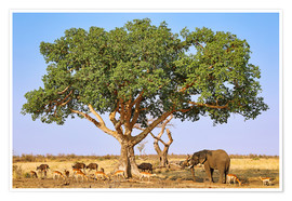 Premium poster The animals of South Africa