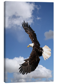 Canvas print  Freedom on eagle wings