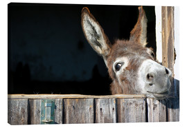Canvas print  Cute & curious little donkey