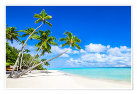 Premium poster  White beach and palm trees in the tropics - Jan Christopher Becke