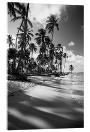 Acrylic print  Tropical palm trees on a Brazilian beach in black and white - Alex Saberi