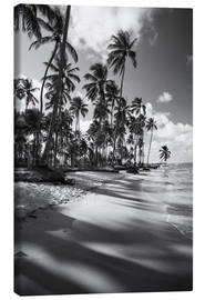 Canvas print  Tropical palm trees on a Brazilian beach in black and white - Alex Saberi